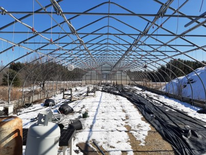 The greenhouse just before COVID-19 arrived.